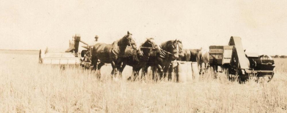 HORSES & MACHINERY